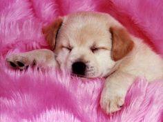 bébé chien trop mignon - Recherche Google