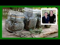 "Drying your own lavender without becoming a ""Pinterest #fail"" (with a video bonus) 