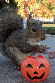 Spooooooooky squirrel: | Meet Sneezy, The Penn State Squirrel Who Loves Wearing Hats