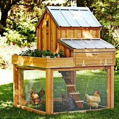 Raising chickens in your backyard in a build your own chicken coop is the best way to get fresh organic eggs. Many people that are looking to raise chickens search for a small or medium sized chicken coop design to Chicken Coop Run, Chicken Coup, Backyard Chicken Coops, Backyard Farming, Chickens Backyard, Backyard Coop, Chickens In Garden, Chicken Roost, Chicken Coop Pallets