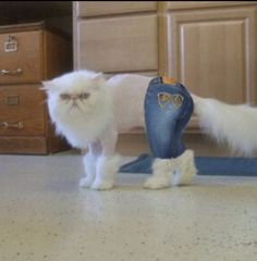 Apple Bottom jeans...Boots with the Fur...LoL