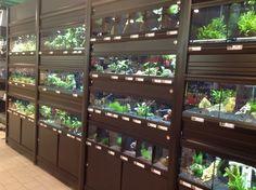 Aquarium Store, Fish Breeding, Reptile Terrarium, Retail Shop, Betta Fish, Snakes, Pet Shop, Fish Tank, Reptiles