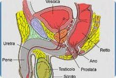 Come prevenire i problemi alla prostata con l'alimentazione [Infografica].