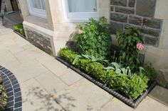 Paved front garden with curved and linear edges with boxed ball hedging. Box Hedging, Front Gardens, Hedges, Landscape, Creative, Plants, Living Fence, Landscape Paintings, Flora