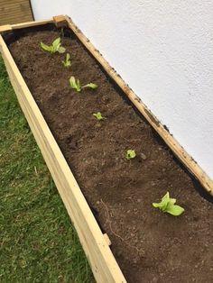 plant some lettuce in your DIY vegetable patch Source by edithperol Potager Palettes, Garden Landscaping, Garden Design, New Homes, Patio, Landscape, Vegetables, Nature, Flowers