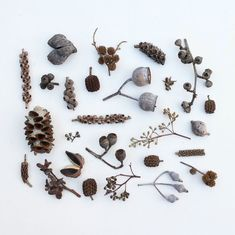 Gardening Autumn - Australian seed pods - With the arrival of rains and falling temperatures autumn is a perfect opportunity to make new plantations Botanical Art, Botanical Illustration, L Wallpaper, Bokashi, Over The Garden Wall, Nature Collection, Seed Pods, Arte Floral, Natural Forms