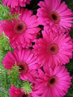 Learn how to make simple and beautiful Spring flowers in vases Dianthus Flowers, Bulb Flowers, Flowers Nature, Exotic Flowers, Diy Flowers, Pretty Flowers, Spring Flowers, Flor Magnolia, Sunflowers And Daisies