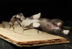 Read yourself to sleep!