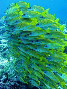 Fish under the sea Underwater Creatures, Underwater Life, Ocean Creatures, Colorful Fish, Tropical Fish, Tropical Paradise, Vida Animal, Fauna Marina, Life Under The Sea