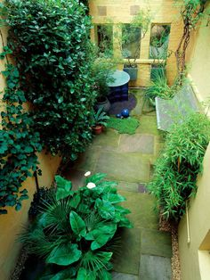 Plants Balances Surrounding Structural Walls  Plants with strong architectural forms often thrive in a shady garden, as in this basement garden where they also contrast well with the surrounding walls.
