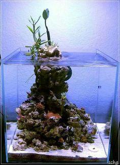 Ultimate budget Reef Lighting you don't want to miss. Coral Reef Aquarium, Saltwater Aquarium Fish, Live Aquarium, Saltwater Tank, Aquarium Terrarium, Planted Aquarium, Nano Reef Tank, Reef Tanks, Nature