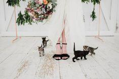 """The Purrfect Day"" Super Cute Kitten Wedding Inspiration (Boho Weddings) Wedding Day Tips, Cat Wedding, Elope Wedding, On Your Wedding Day, Wedding Blog, Boho Wedding, Black And White Wedding Theme, Black And White Wedding Invitations, Super Cute Kittens"