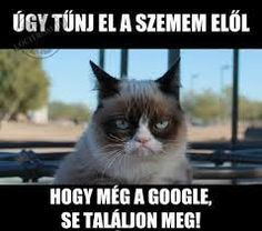 "Képtalálat a következőre: ""grumpy cat magyarul felirattal"" Funny Shit, Funny Cats, Funny Animals, Cute Animals, Funny Stuff, Funny Things, It's Funny, Cat Stuff, Random Stuff"