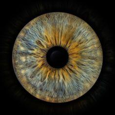 Blue Background Images, Blue Backgrounds, Iris, Photos Of Eyes, Eye Art, Human Anatomy, Alternative Medicine, Beautiful Eyes, Unique Art