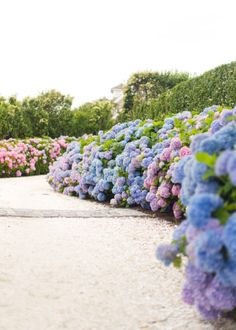 hydrangea driveway nantucket on design darling Hortensia Hydrangea, Hydrangeas, Hydrangea Season, Silk T Shirt, Shirt Dress, Cottage Garden Design, Cottage Gardens, Little Island, Gardens