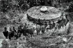 The Spirit Bowl - TEOMONTANA