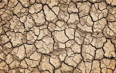 Blog - Australian Drought Crisis: What this Means for our Crops | Honest to Goodness