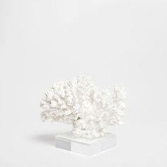 DECORATIVE CORAL - Decoration Accessories - Decoration | Zara Home Australia