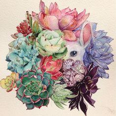 Succulent plants & bunny illustration