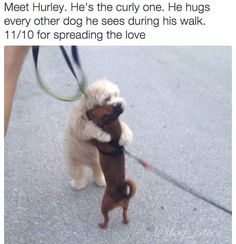 I need to meet this dog.