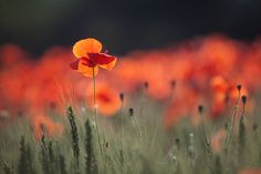 Red Spring (IX) by Camilo Margelí on 500px
