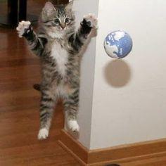 Canto dos Gatinhos: Lindas fotos de Gatos