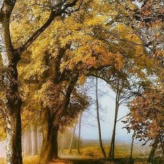 #Repost @capochino67 #autumn #landscapelovers ... by Lars van de Goor. - #beautiful #colors #trending #trendingnow #trendingtopic #instabeauty #instagood #instagramers #instadaily #instago #bestoftheday #nature #leaves #trees