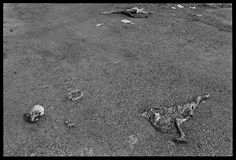 Reflections on the Rwandan Genocide; Photographs By James Nachtwey - LightBox