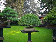 Bonsai, Stepping Stones, Outdoor Decor, Plants, Home Decor, Stair Risers, Decoration Home, Room Decor, Bonsai Trees