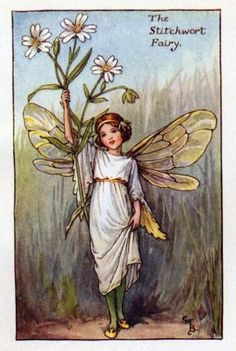 Cicely Mary Barker ~ The Stitchwort Fairy