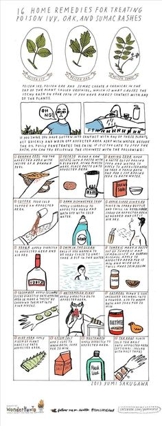 16 Home Remedies for Treating Poison Ivy, Oak, & Sumac Rashes « The Secret Yumiverse