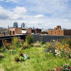 A Brooklyn architect looked no further than his own home when designing this rooftop oasis. Eight inches of soil on the roof absorb rainwater runoff that would normally end up in the city streets. Rainwater absorption by roofs helps prevent pollutants from contaminating the water supply and flooding near the home.
