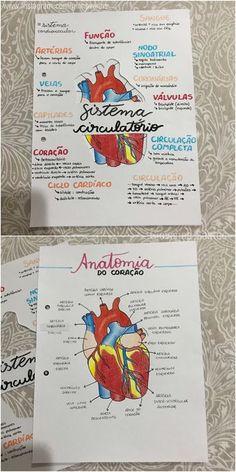 Mapa Mental Sistema Cardiovascular Circulatorio Biologia Medical School Studying Study Biology Biology Lessons