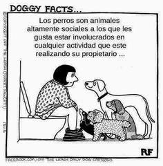 Los perros son animales altamente sociales a los que... :D