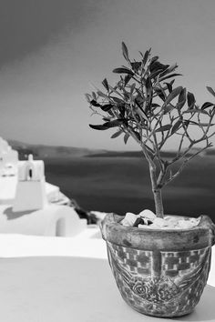 Alexander's Boutique Hotel Of Oia Santorini is one of the best luxury boutique hotels in Greece, located in Oia overlooking the caldera. Santorini Grecia, Santorini Island, Mykonos Greece, Potted Olive Tree, Tree Interior, Interior Design, Tree Photography, Paros, Mediterranean Style