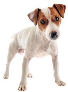 Property protected by Danish Swedish Farmdog dog with attitude metal sign #B