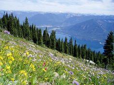 Alpine Flowers Stock by leeorr-stock