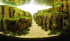 Foto di acquari che sembrano fondali oceanici
