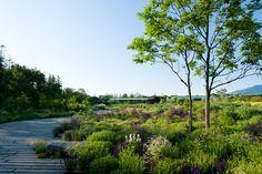 Andrew Grant and Dan Pearson win Royal Designer for Industry in Landscape Design « World Landscape Architecture – landscape architecture webzine Plant Design, Garden Design, Landscape Architecture, Landscape Design, Forest Landscape, Dan Pearson, Public Garden, Garden Inspiration, Garden Landscaping