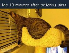 Funny kittens and cats, cat humour. For the funniest cats and kittens pictures and quotes visit www. Funny Animal Pictures, Funny Animals, Cute Animals, Animal Pics, Wild Animals, Dog Pictures, Animals Beautiful, Crazy Cat Lady, Crazy Cats