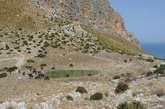 Monte Cofano (TP) - Bovini si abbeverano sul Monte Cofano in pieno agosto a circa 40° di temperatura, sullo sfondo il Mar Tirreno - Some cattles drinking on Mount Cofano in the middle of a scorching August, in the background the Tyrrhenian Sea.