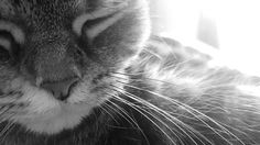 BaW whiskers