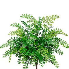 19' UV-Resistant Outdoor Artificial Maidenhair Fern Plant -Green (pack of 12) >>> Be sure to check out this awesome product.