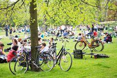 Have a picnic in Vondelpark, Amsterdam
