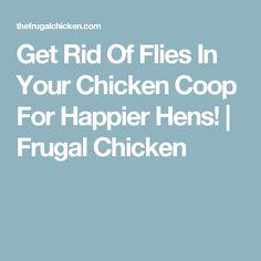 Get Rid Of Flies In Your Chicken Coop For Happier Hens! | Frugal Chicken