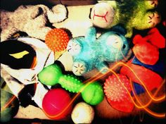535 - Brinquedos de cachorro #umafotopordia #picoftheday #brasil #brazil #n8 #snapseed #pixlromatic+
