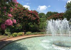 5 Charlotte gardens to help you unwind - Charlotte Agenda