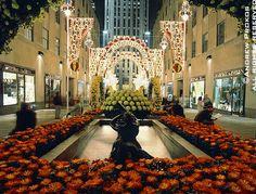 Photos of Rockefeller Center - Fine Art Prints, High-Res Stock Images - View of Rockefeller Center Channel Gardens at Night