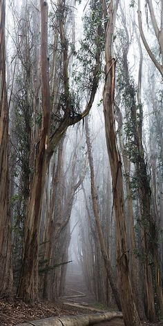Beautiful Woodland #photography