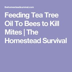 Feeding Tea Tree Oil To Bees to Kill Mites | The Homestead Survival